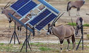 Африку ожидает бум солнечной энергетики