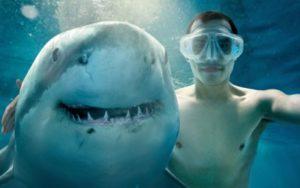 Египетские власти предупреждают об опасности акул в Красном море