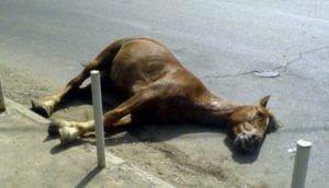 В Китае жертвами произошедшего из-за лошади ДТП стали 12 человек