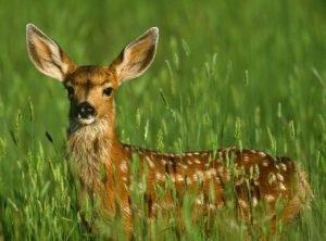 WWF: за 42 года диких животных стало на 60% меньше
