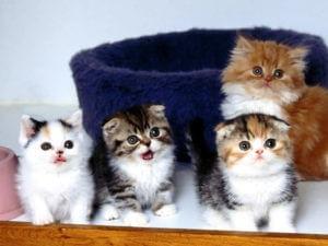 ИГИЛовцы запретили кошкам размножаться