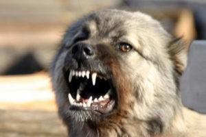 Бездомные животные загрызли труп бездомного азербайджанца