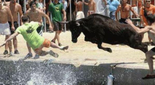 приснилось что за мной гонятся быки тех