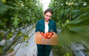 Россия в вопросе импорта томатов не доверяет Армении, Беларуси и Азербайджану