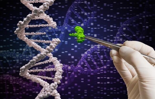 КНР первым начал массово корректировать ДНК людей