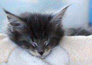 В России мужчина приговорен к 3,5 годам за жестокое убийство кошки и котят