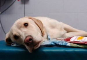 В Ереване мужчина пытался покончить с собой из-за невозможности помочь больному псу
