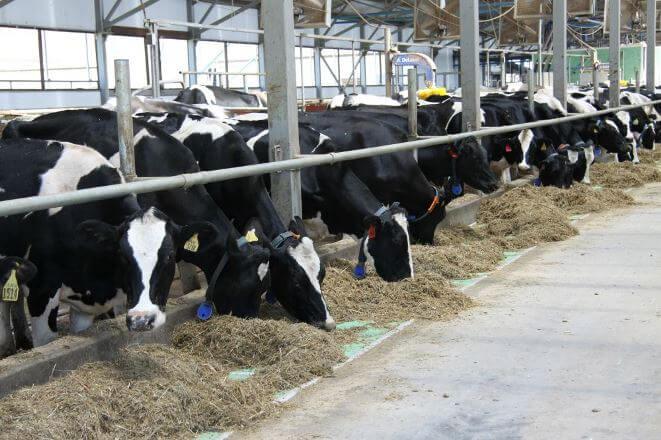 В Армении будут предоставляться кредиты для приобретения крупного рогатого скота со ставкой в 2%