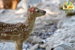 В Ереванском зоопарке родились 4 оленёнка