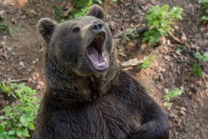 На горе Арагац медведь напал на граждан Польши