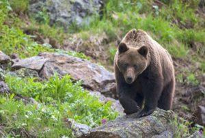 В Армении польский турист погиб, спасая невесту от нападения медведя