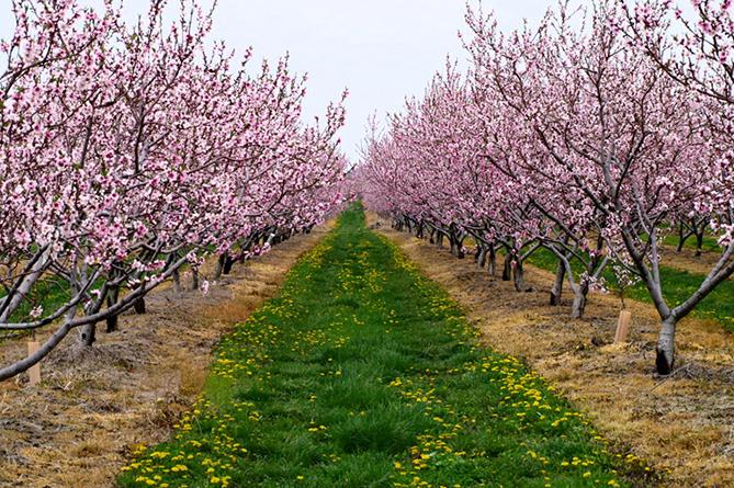 В Армении станет выгодно разводить интенсивные сады, предоставлены новые льготы