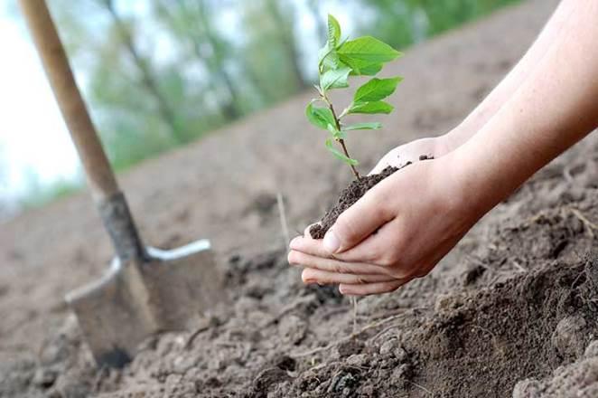 Правительство Армении выделит «Армлесу» 424 млн на восстановление лесов на площади около 150 га
