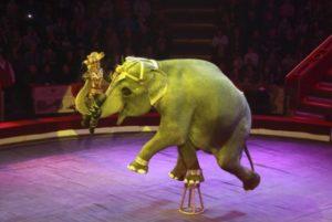 В словацких цирках запретили шоу с животными