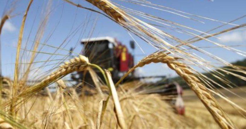 В селе Цовагюх собран беспрецедентно высокий урожай зерна