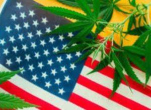 Пять американских штатов легализовали использование марихуаны
