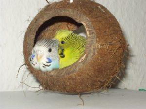 Гнездо для волнистых попугаев: особенности выбора