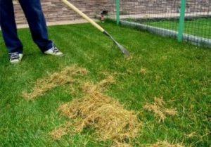 Когда лучше сажать газонную траву ?