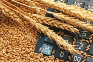 Китай отказался принимать пшеницу из Казахстана